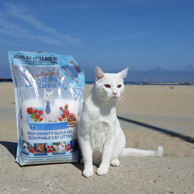 bag-beach.jpg