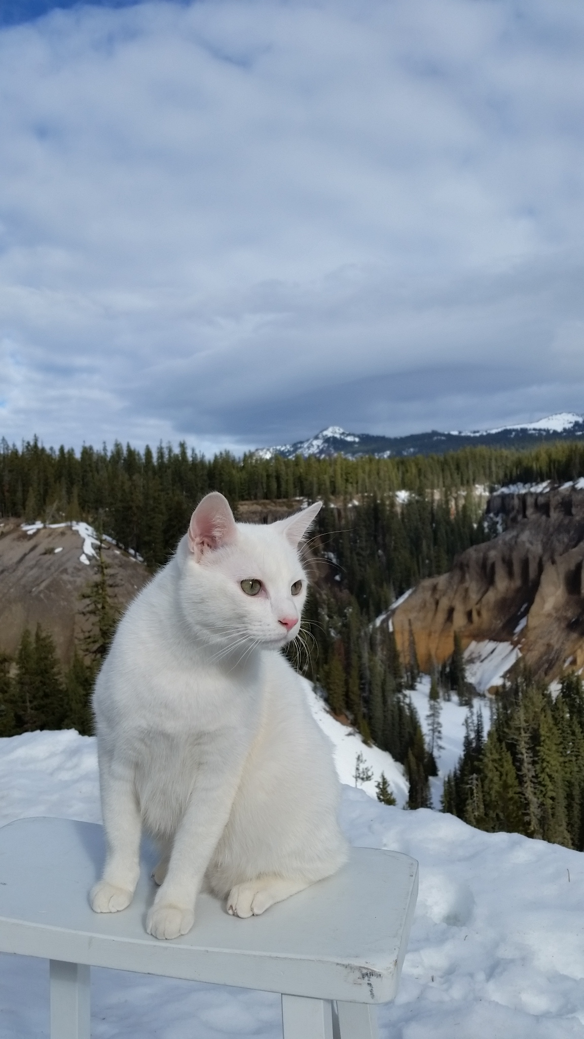 stovepipecat-craterlake-fossilstream.jpg