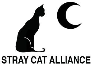 straycats.jpg